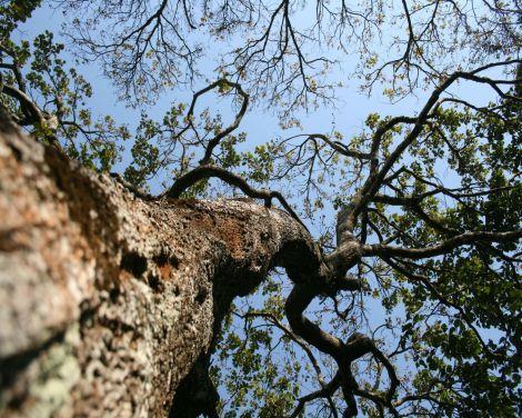 foresttree